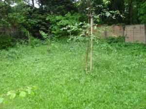 The wild end of the garden
